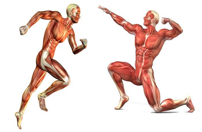 Ejercicios para cada músculo