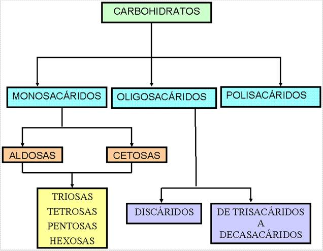 diferentes carbohidratos