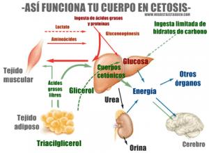 cetosis