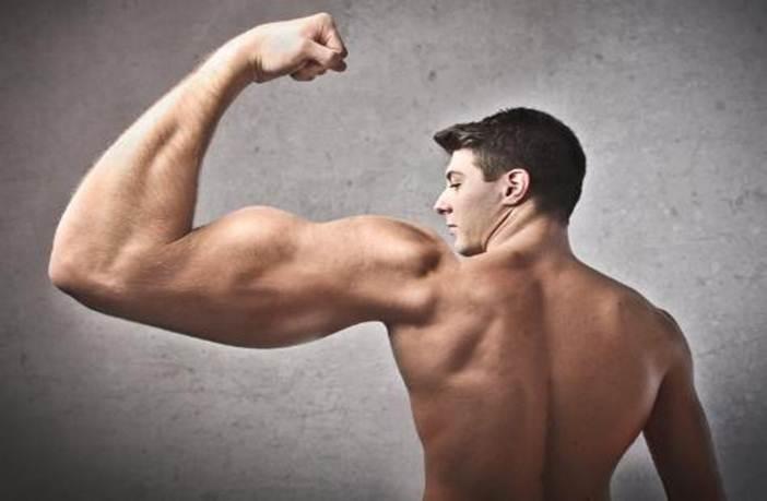 bicéps tríceps musculoso