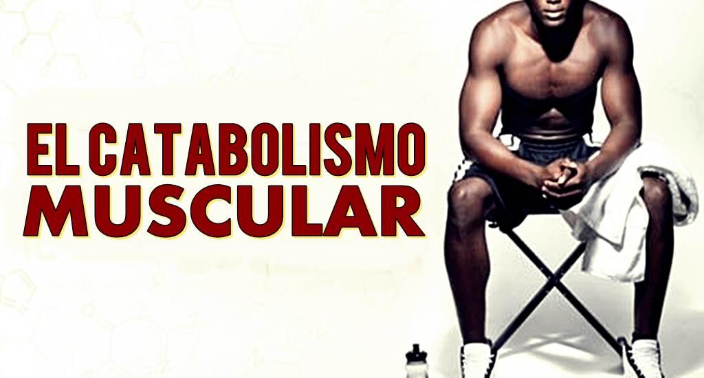catabolismo-muscular