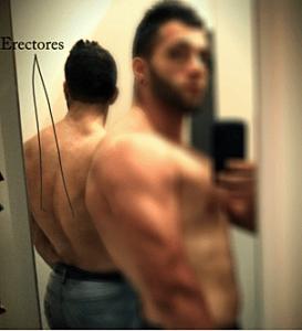 músculos-erectores