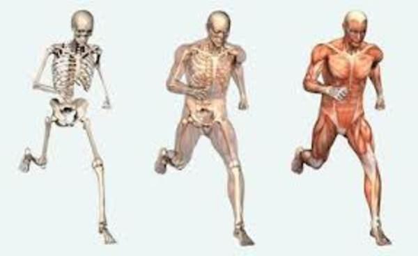 Movimiento del cuerpo humano