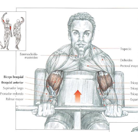 curl de biceps en banco scott