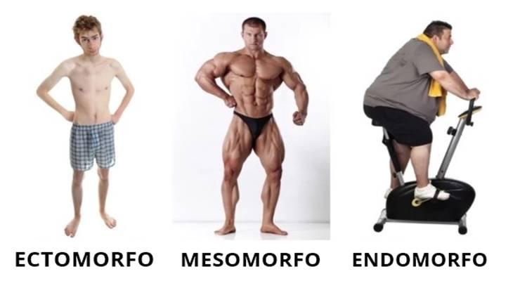 Suplementacion endomorfos y ectomoros