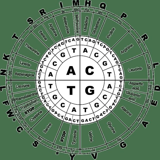 Ruleta de Aminoacidos