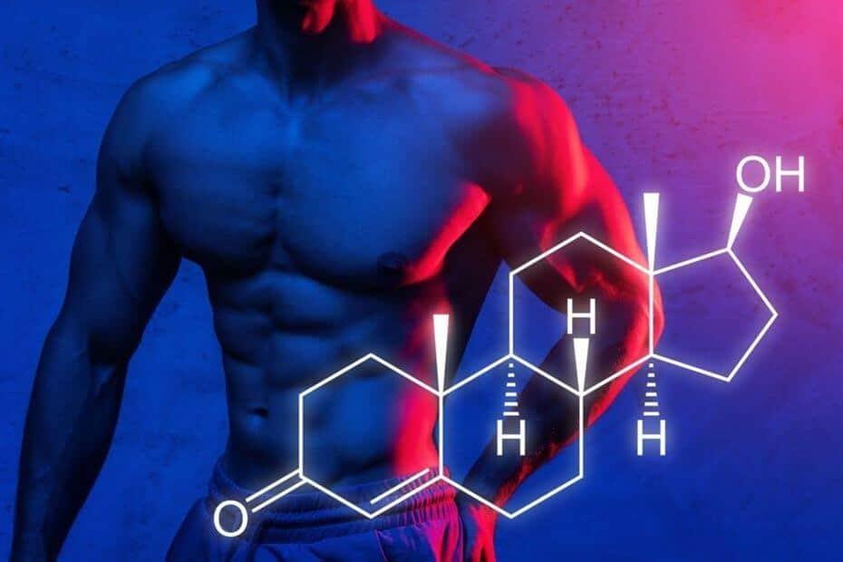 hormonas-y-masa-muscular