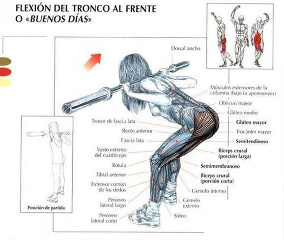 flexión-de-tronco-para-isquiotibiales
