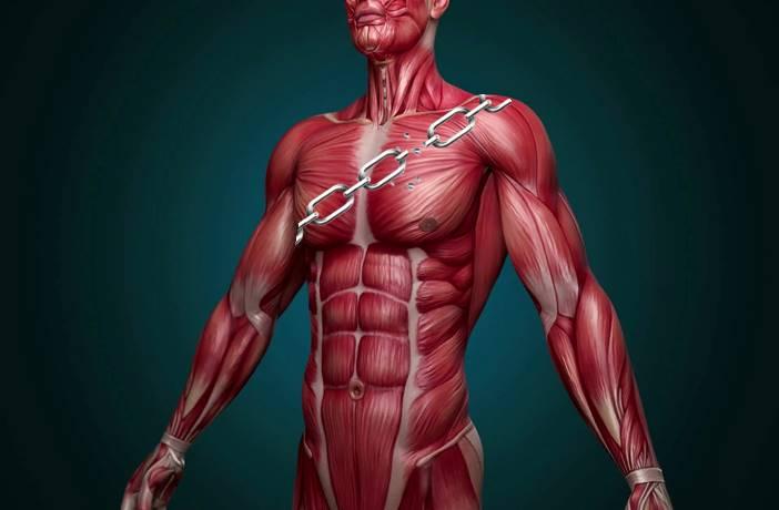 Qué son las cadenas musculares
