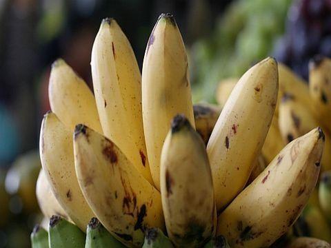 plátano de manzan