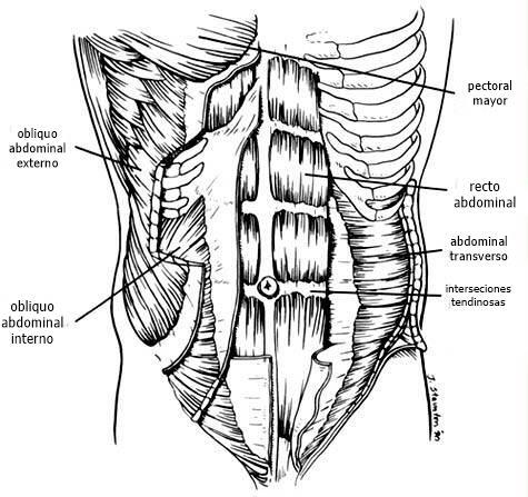 Músculos abdominales para mejorar equilibrio