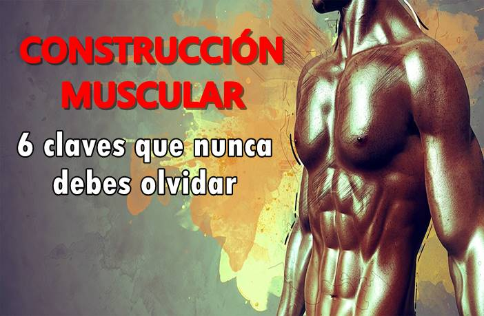 claves par la construcción muscular