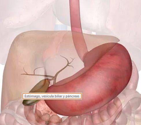 Estómago, vesícula biliar y páncreas