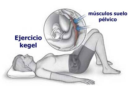 músculos suelo pélvico