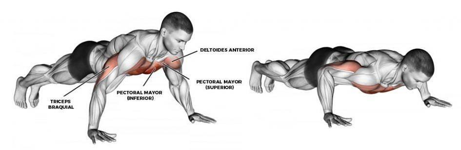 Músculos trabajados en las flexiones