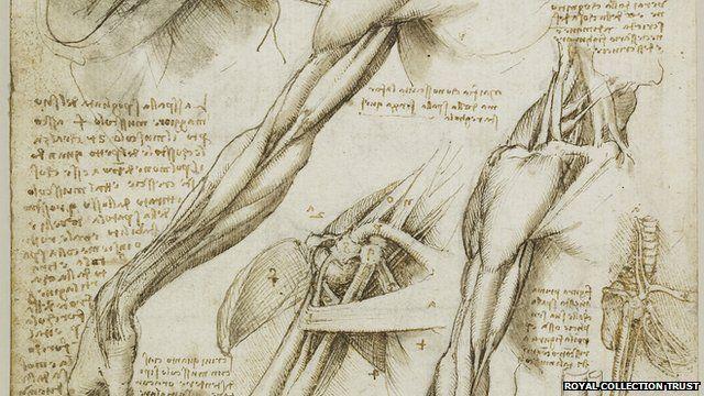 Dibujo de músculos de Leonardo DaVinci