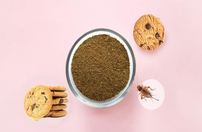 Harina de grillos galletas