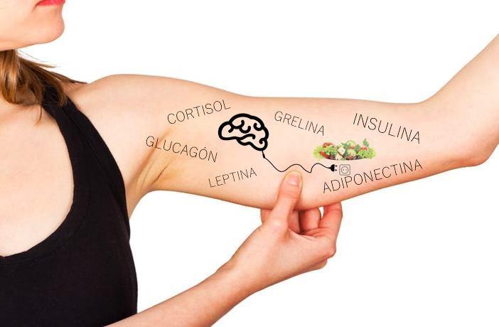 Hormonas reguladoras de grasas