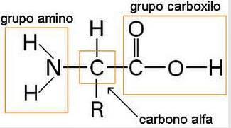 Composición química de las proteínas