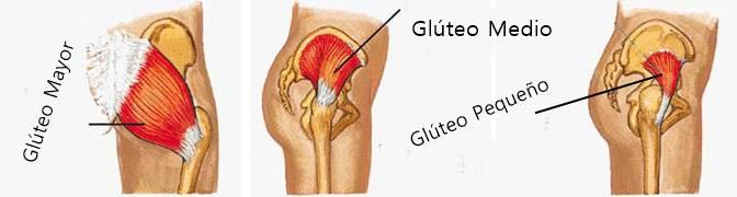 musculos-de-los-glúteos-anatomia
